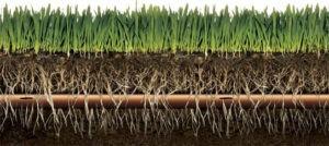 Капельный полив газона