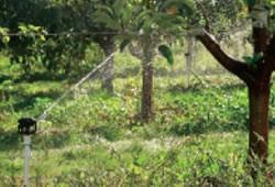 Полив для фруктовых деревьев и садов